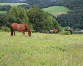 Vielseitige Bewegung für das Pferd beim PSV Grünstädtel
