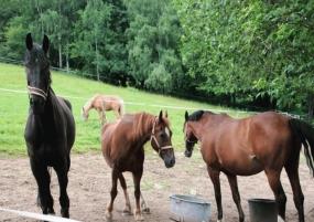 Sozialkontakt für die Pferde des PSV Grünstädtel